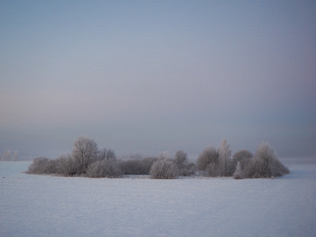 Island of trees in the ice in the middle of the field. Winter landscape