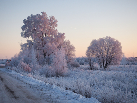 Beautiful winter landscape. Trees in the snow, snowdrifts. Gentle pink morning light