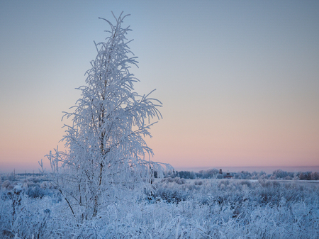 Winter landscape. Beautiful snow-covered tree in the field