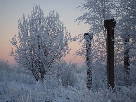Snow-covered white trees and remains of metal structures