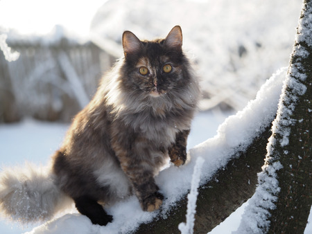 Scared cat in the tree. Portrait of an animal. Winter, snow Imagens