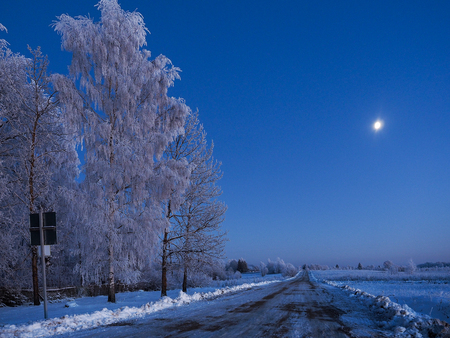 Beautiful winter rural road. Blue light, snow-covered trees Imagens