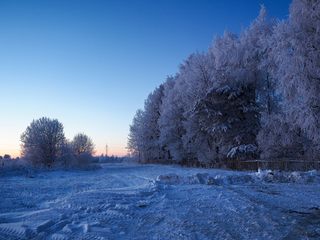 Beautiful winter rural landscape. Blue light, snow-covered trees Banque d'images - 115399120