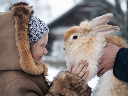 Acquaintance of a little girl and a huge rabbit. Banque d'images - 115399181