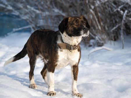 Portrait of a dog with icy muzzle. Banco de Imagens