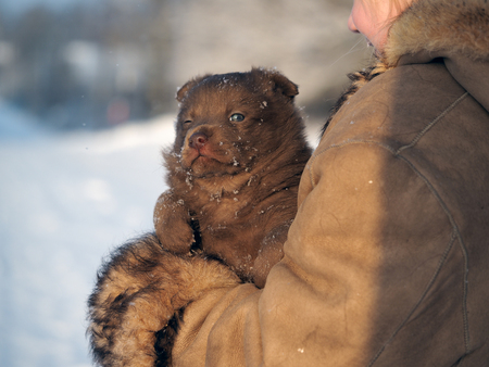 Cute little puppy in the hands of a child. Portrait of a dog. Winter, snow