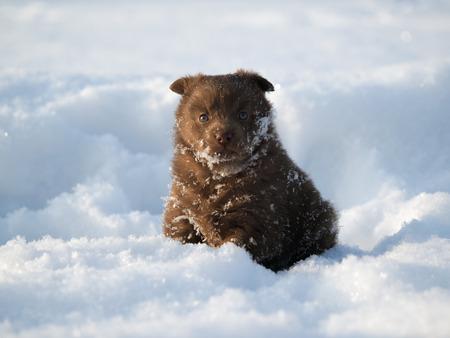 Cute little puppy in a snowdrift. Cold, winter. Dog gets cold Banco de Imagens