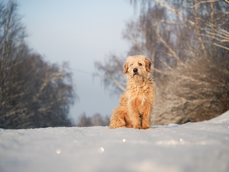 Furry dog sitting in the snow. Portrait of dog Banco de Imagens