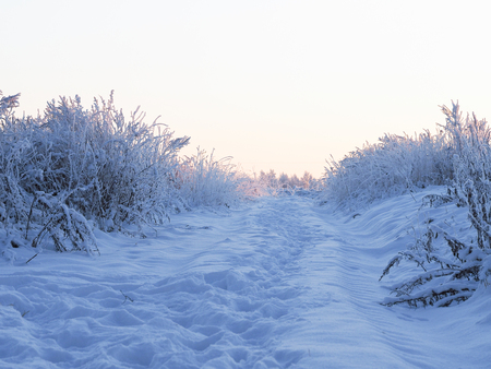Snow-covered rural road through the field. Plants in snow. Twilight, beautiful light. Cold, winter