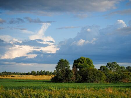 Landscape. The fields, the sky. Summer, harvest time