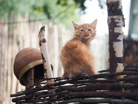 Red kitten on an old village fence