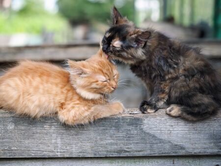Kittens cute lick each other. Friendship and love cats