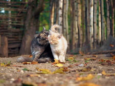A cat lovingly licking the kitten. Autumn, fallen leaves, sun. The backdrop of the rustic fence Stock fotó
