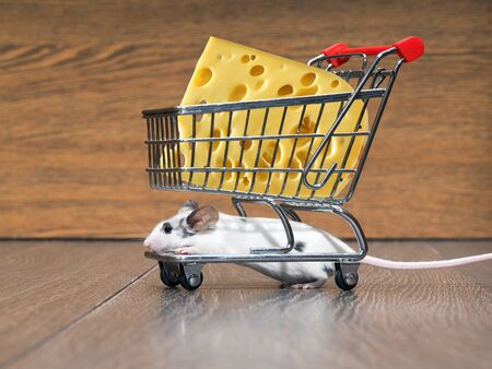 White rat drags a huge supermarket cart with a large piece of cheese.