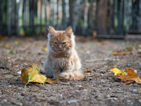 A small sick kitten. Autumn, sad unhappy animal