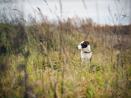 Hunting dog in the field among the tall grass Stock fotó