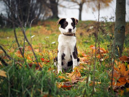 Young puppy hunting dog. Portrait