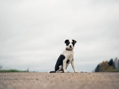 Very sad young puppy on the road Stock Photo