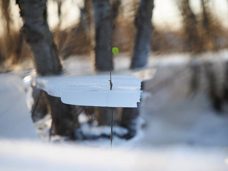The plant released a green leaf through the blocks of ice