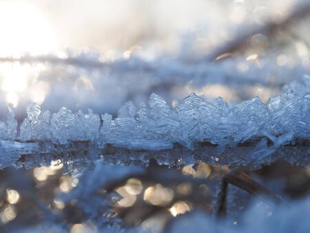 Frost, icing on branches and grass. Change of weather, cold snap, consequences of icy rain