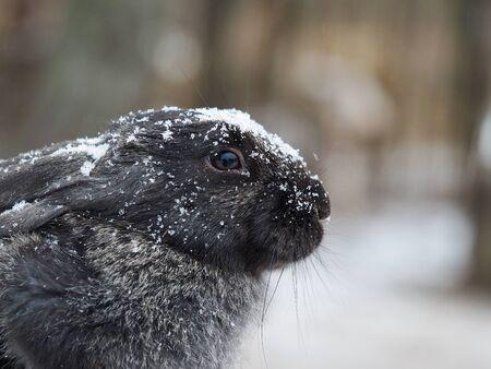 Rabbit in the snow. The animal is freezing Banco de Imagens