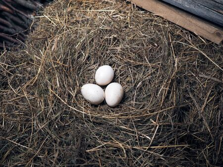 Duże jaja drobiowe leżą w sianie Zdjęcie Seryjne