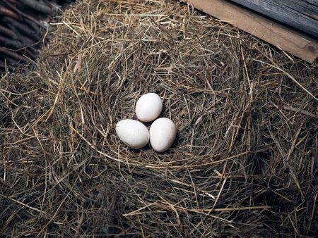 Grote pluimvee-eieren liggen in het hooi Stockfoto