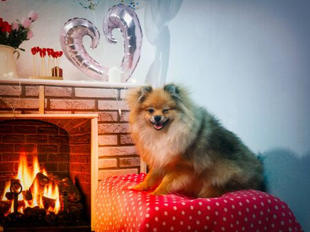 Funny dog winks. Cozy home interior with fireplace 스톡 콘텐츠