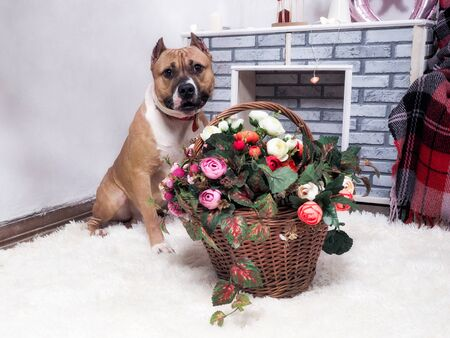 Beautiful dog with a basket of flowers