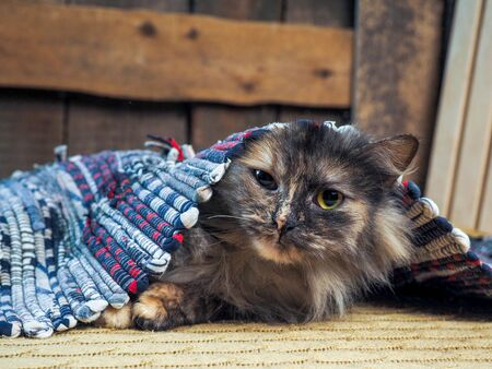 Funny cat lying under the rug. The animal is playing