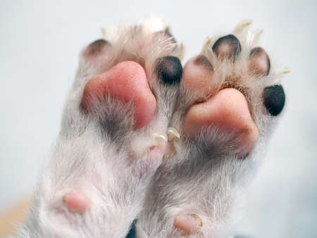 cute dog paws close up