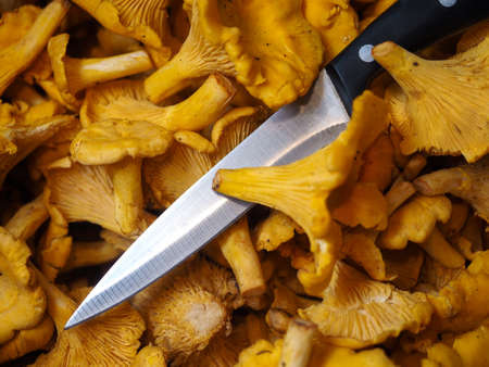 Chanterelle mushrooms on the table