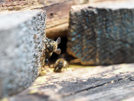 bees in the hive gather in a pile Banque d'images