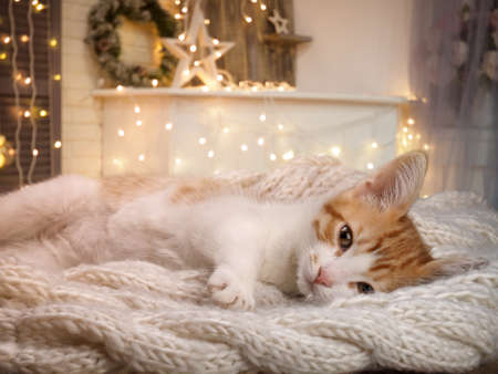 Cute kitten on a blanket in a Christmas interior