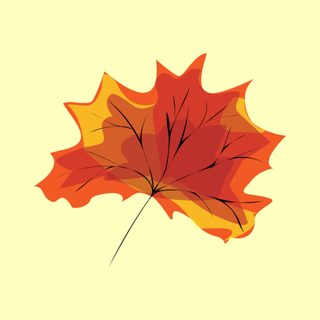red maple leaf: Red maple leaf. Natural vector background element tree