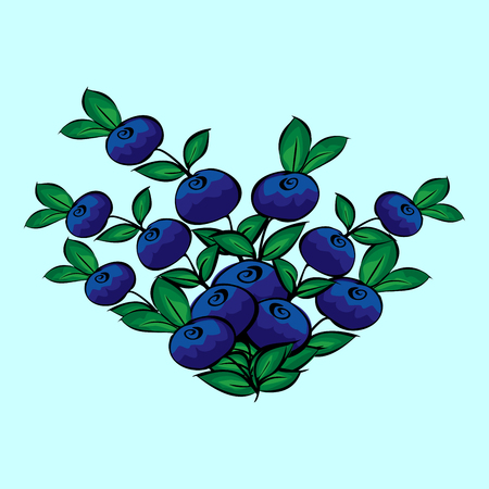 vector background: Blue berry Bush blueberries natural vector background Vettoriali