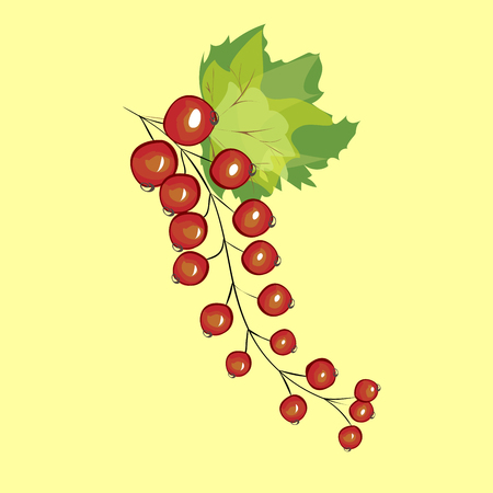 red currant: Red currant berries harvest dessert brush shrub