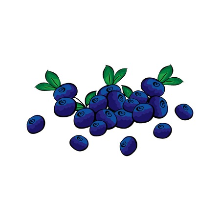 handful: Hand drawn blueberries closeup. Handful blueberries vector. Hand-painted.