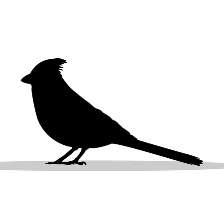 Cardenal pájaro negro silueta animal Foto de archivo - 84478844