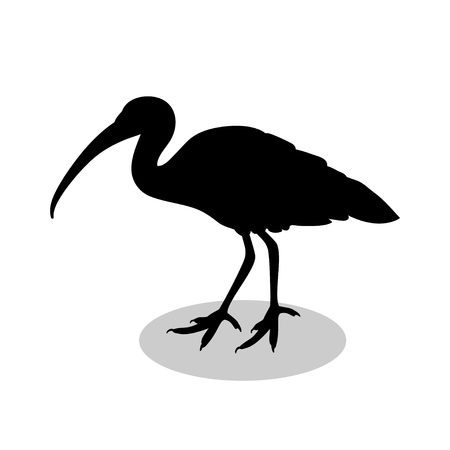 Ibis bird  black silhouette animal