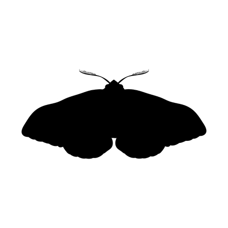 Moth insect black silhouette animal