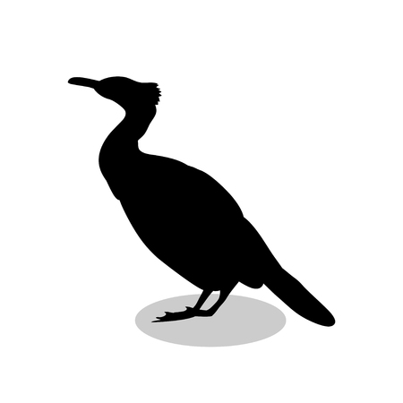 Cormorant bird black silhouette animal. Vector Illustrator.