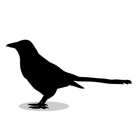 Magpie bird  black silhouette animal. Vector Illustrator. Illustration
