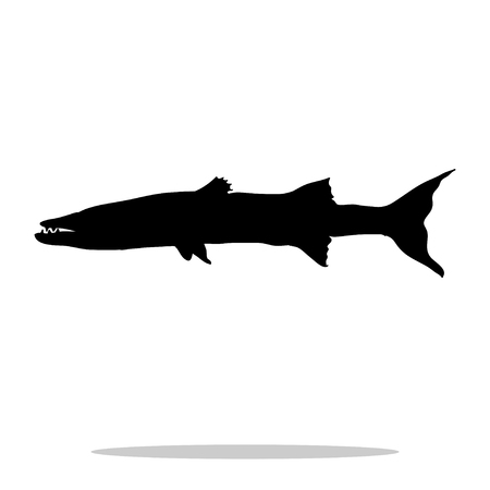 ichthyology: Barracuda fish black silhouette aquatic animal. Vector Illustrator.