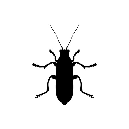 insect black silhouette animal