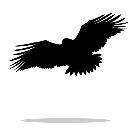 Eagle hawk golden eagle bird black silhouette animal