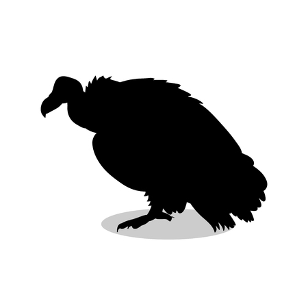 Vulture bird black silhouette animal