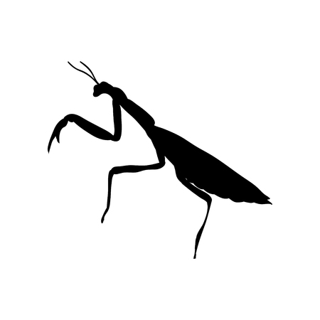 Praying mantis insect black silhouette animal Stock Photo
