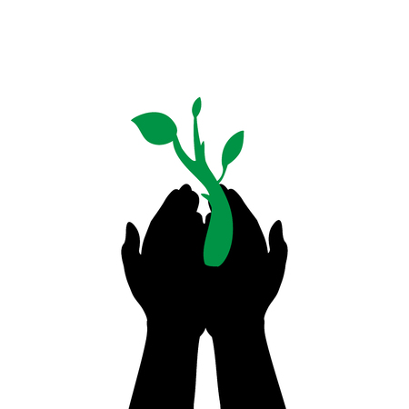 Hands hold plant sprout.