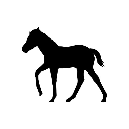 Foal horse farm mammal black silhouette animal